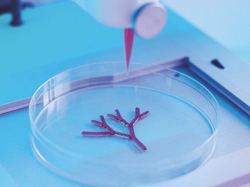 Bioprinting a vascular branch.