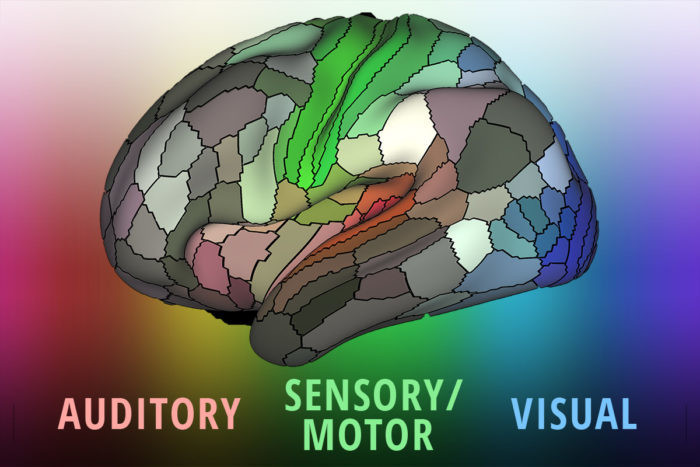 The brain's surface has 180 sections