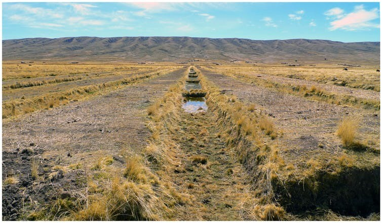 A reconstruction of the raised field system outside of Tiwanaku. This landscape is currently undergoing rapid environmental change.