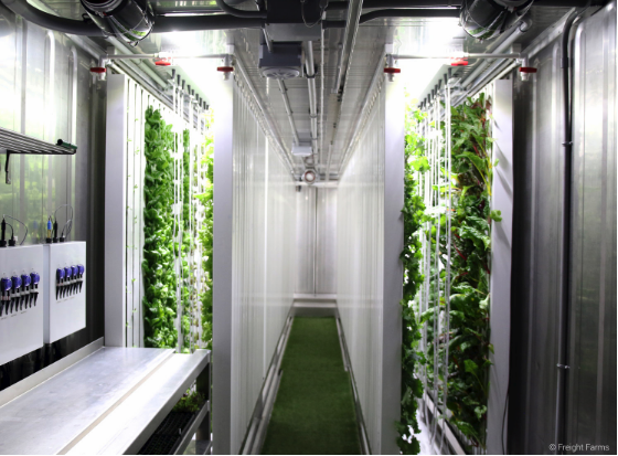 A vertical farm inside a shipping container.