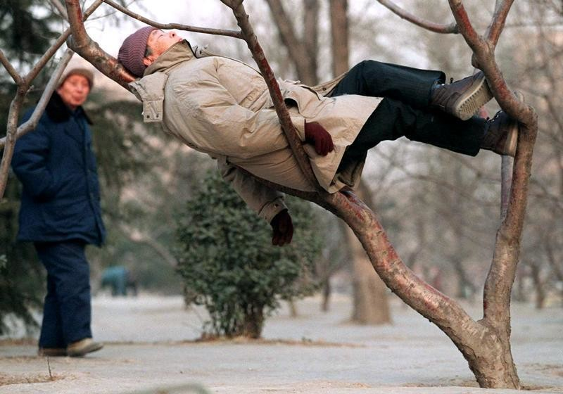 A man watches a fellow citizen use a tree for a bed during an afternoon snooze in a Beijing park January 22. An unusually mild day in the Chinese capital lulled at least one visitor to this eastern city park to sleep for a while - PBEAHUMSJBQ
