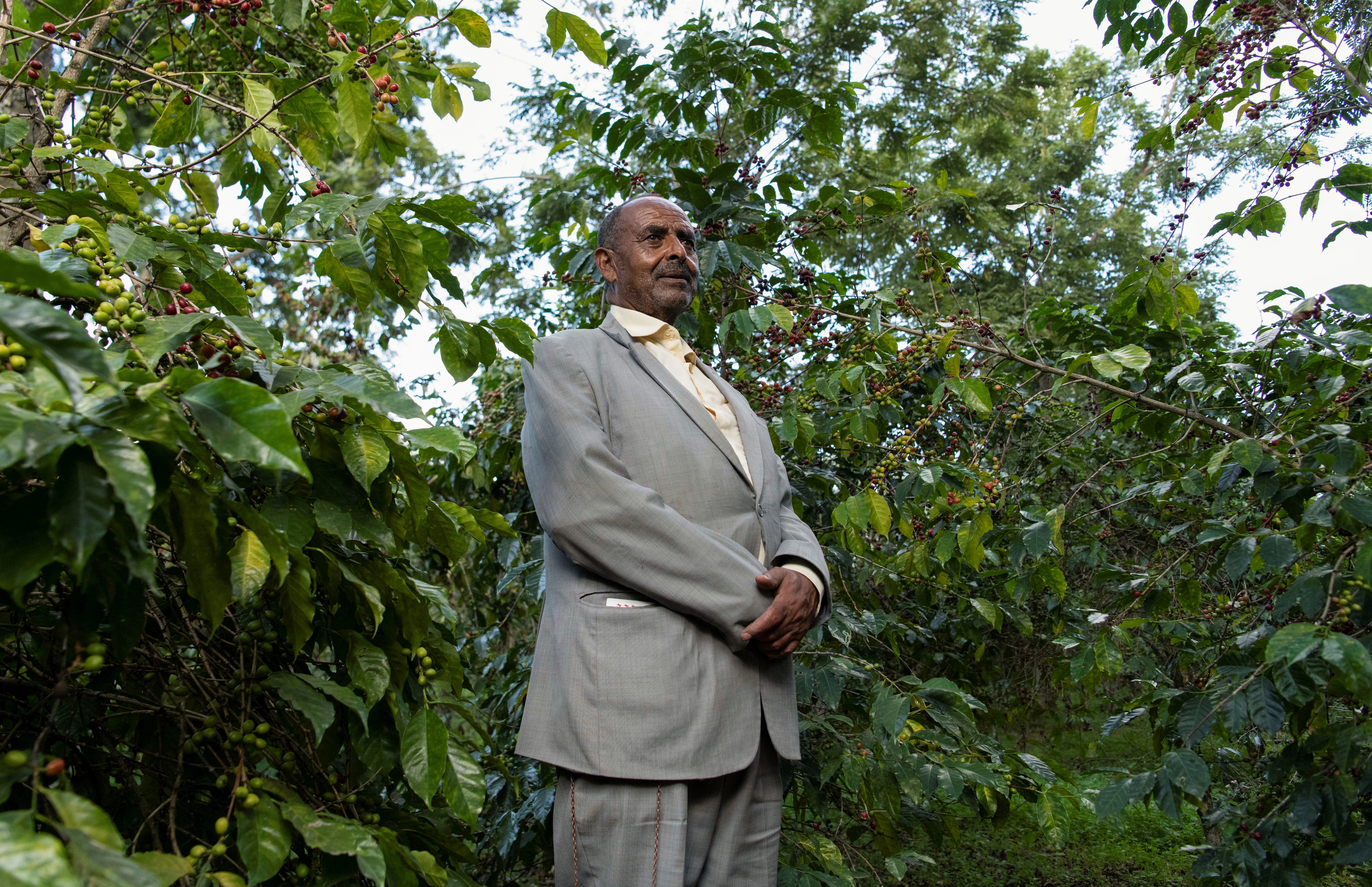 Yosef Lema, 72, stands at his coffee farm in the Sidama zone, Ethiopia.