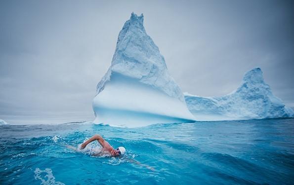 Pugh swimming in the Antarctica