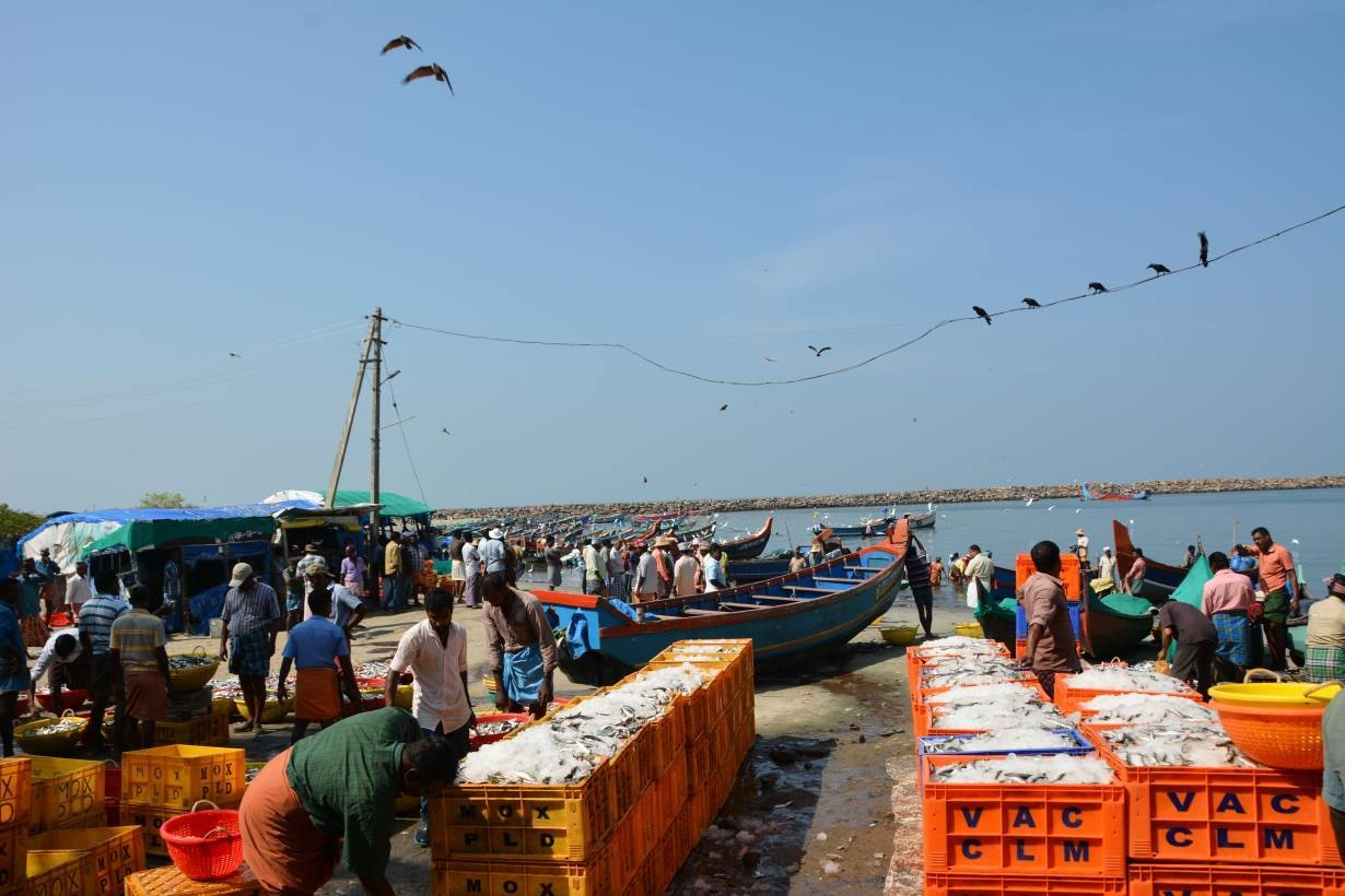 Fish traders pack boxes full of iced oil sardines at Chellanam Fishing Harbour, in Chellanam, India, January 17, 2019.
