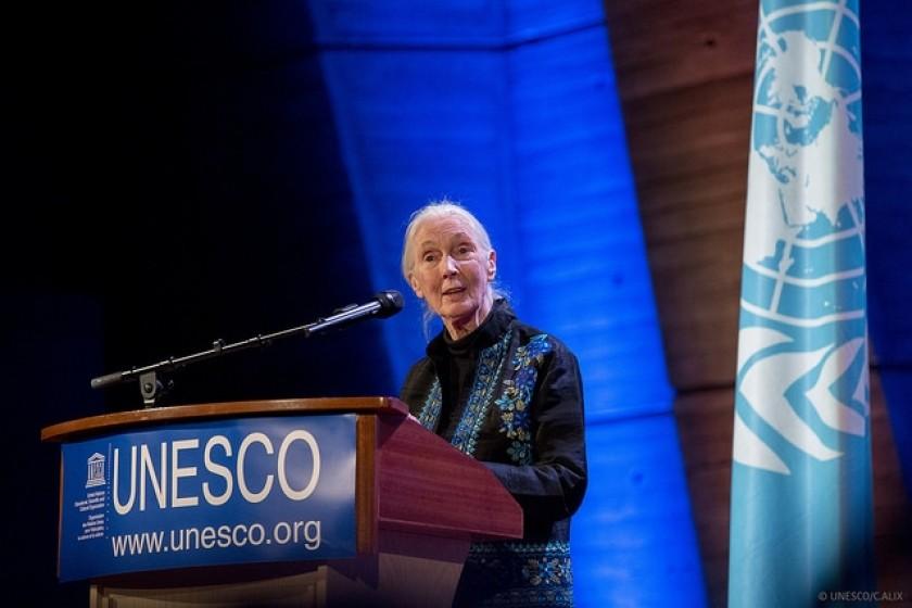Dr Jane Goodall à l'Unesco