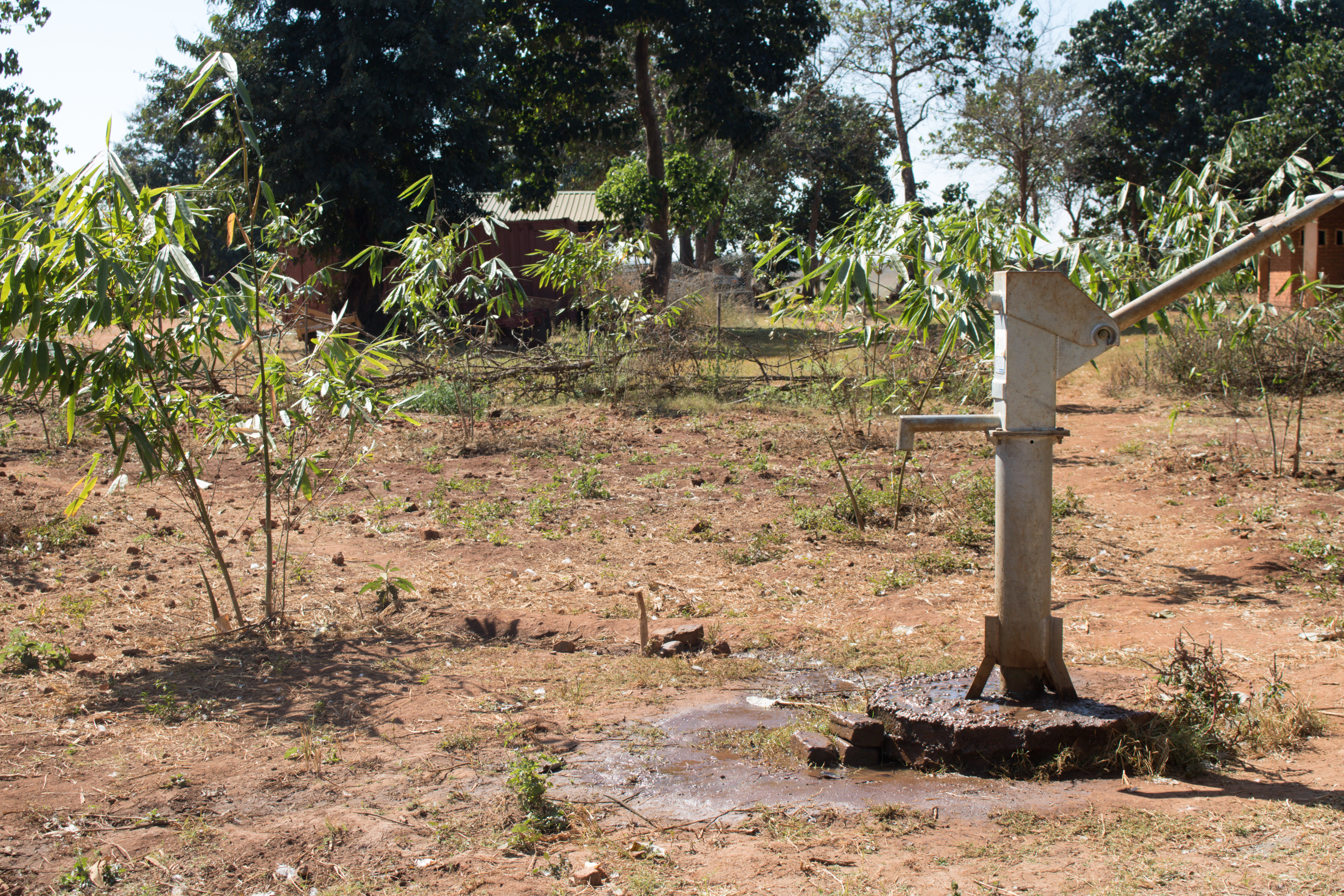 AfriBam planted giant bamboo seedlings around its water pump to absorb standing water.