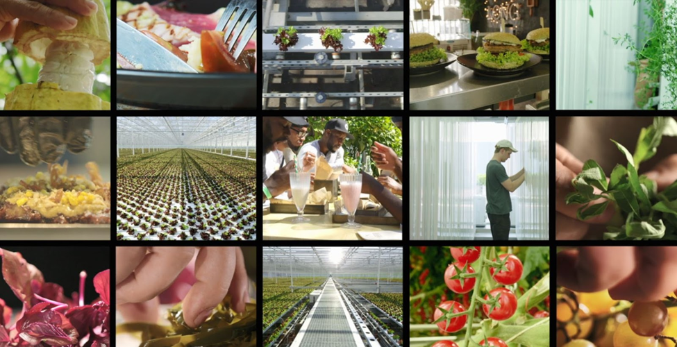 urban farms agrilculture Netflix New York