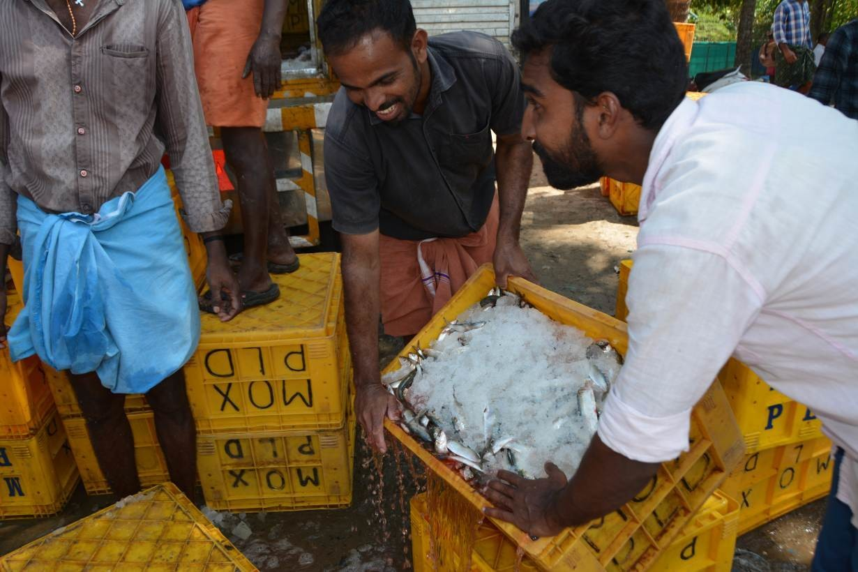 A pair of fish traders empty water from a box of oil sardines before stacking it inside a truck to be driven to buyers, at Chellanam Fishing Harbour, in Chellanam, India, January 17, 2019.