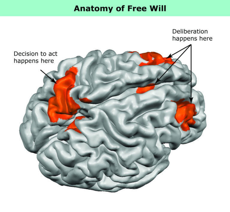 This Is What Free Will Looks Like In Your Brain World Economic Forum