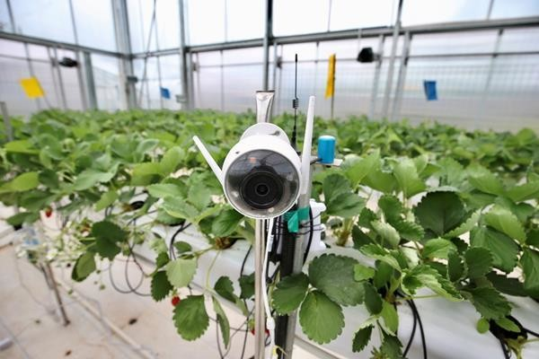 Artificial Intelligence Agriculture robotics tech for good
