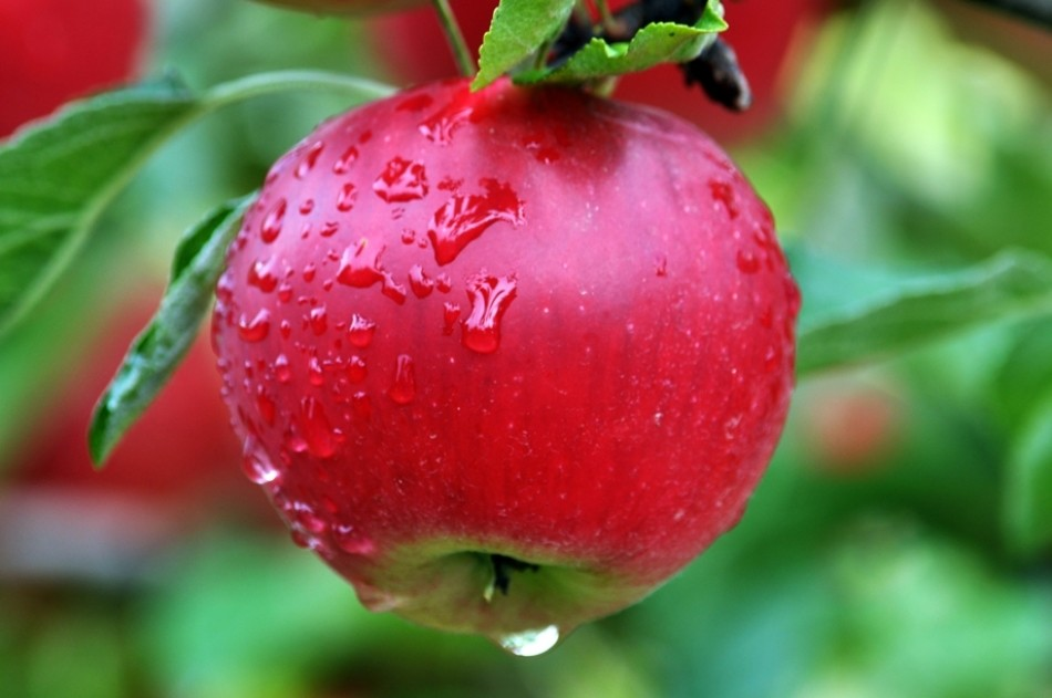 It takes 70 litres to produce one apple! When we throw out food we are also wasting the resources that went into producing it