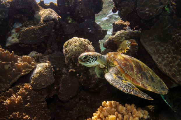 Coral reefs offer wildlife habitats and more.