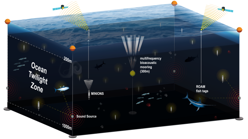 Looking at the Ocean Twilight Zone using minions, multifrequency bioacoustic mooring, ROAM fish tags.