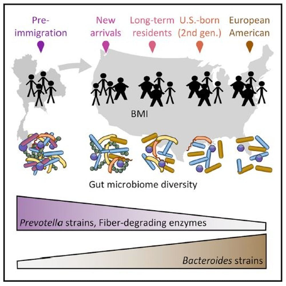 Migration from Southeast Asia to the US comes with a loss in gut bacteria diversity.