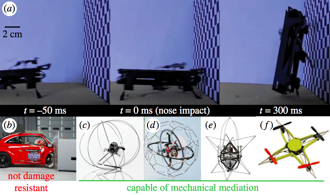 Mechanically mediated control in human technologies. (a) Dynamic Autonomous Sprawled Hexapod Robot (DASH) [19] performing a rapid head-first impact transition with no sensory input. Its robust construction enables it to perform high-speed manoeuvres without suffering damage while approaching the wall at over 80 cm s−1. (b) Volkswagen Beetle after incurring significant damages during a frontal impact crash test (Courtesy: Insurance Institute for Highway Safety, www.iihs.org). A typical coefficient of restitution for a front automobile bumper is ≈0.3 or 91% energy absorption. (c) Miniature (7 g) jumping robot [33] with self-recovery capabilities enabled by the robust exoskeletal cage. (d) Gimball robot with passive exoskeletal cage to use collisions for manoeuvring in cluttered environments [34]. (e) Airburr [35], an indoor flying robot designed specifically to withstand collision and self-manoeuvre using a shock-absorbing exoskeleton. (f) Insect inspired mechanically resilient multicopter [36] whose frame can undergo large deformations without permanent damage during collisions.