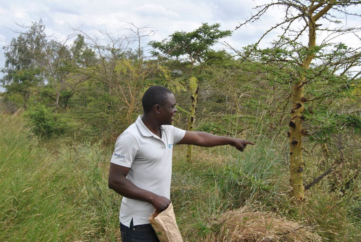 Nicholas Waweru points out tree varieties in a 70-acre forest in Kisaju, Kenya, July 28, 2018.
