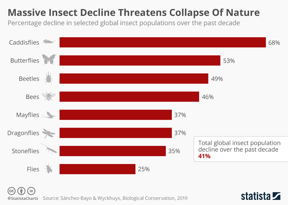 This is what would happen to the natural world if all the insects disappeared