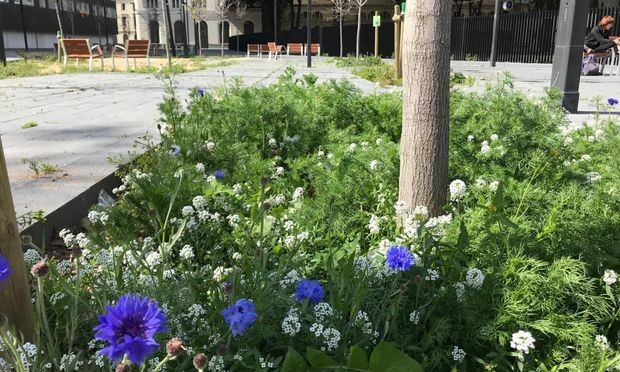 Flowers and wildlife grow in the city of Barcelona