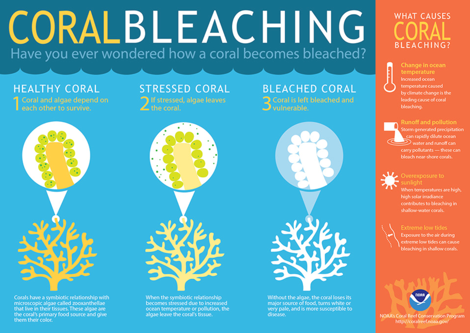 Coral is sensitive to changes in temperature, light or nutrients