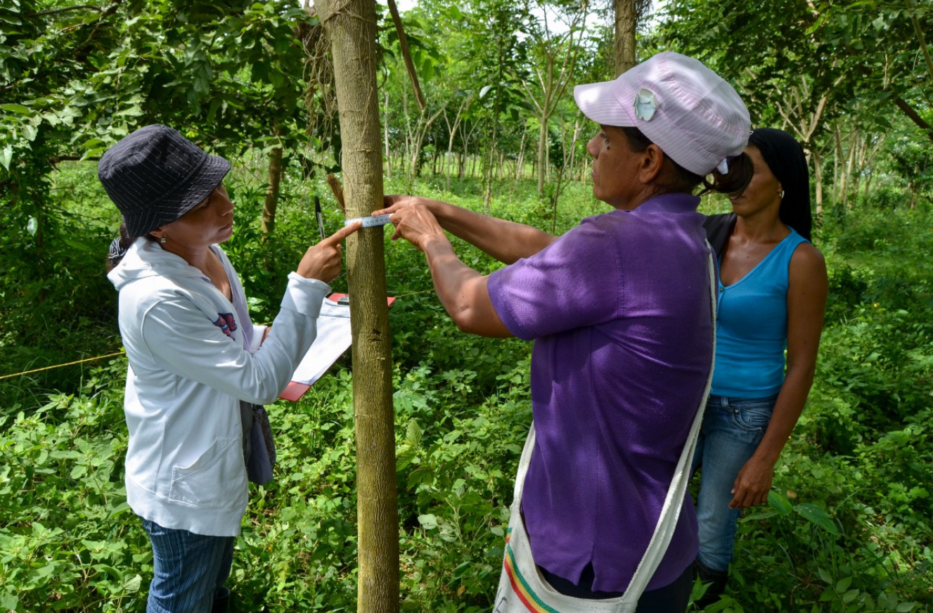 these people are working on a community reforestation project