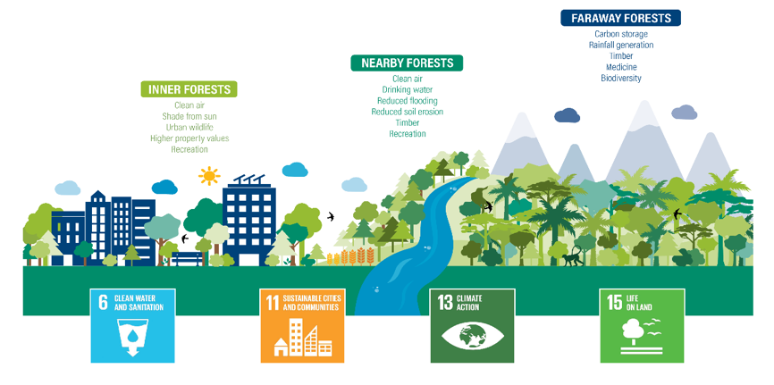 a chart showing how the  Cities4Forests initiative works
