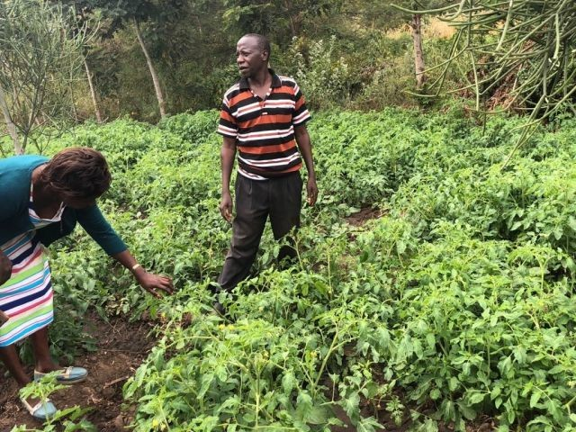 Abel Mutie, a Kenyan farmer, uses a biodiesel-powered irrigation pump in his tomato field. Photo by Esther Kahinga
