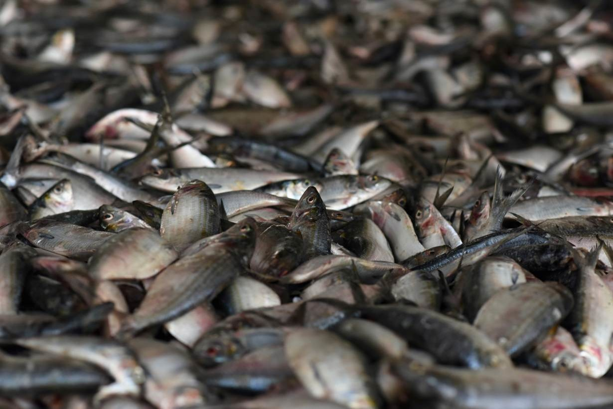 Fish are displayed for sale at the fish market in Joal-Fadiouth, Senegal, April 10, 2018.
