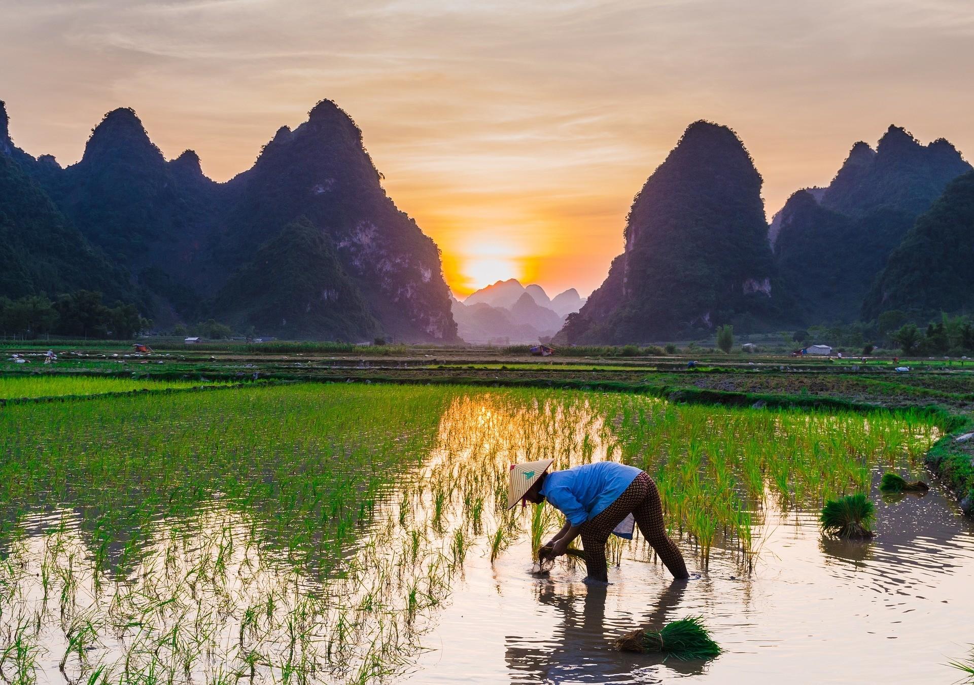 Food sustainability farming farm rice