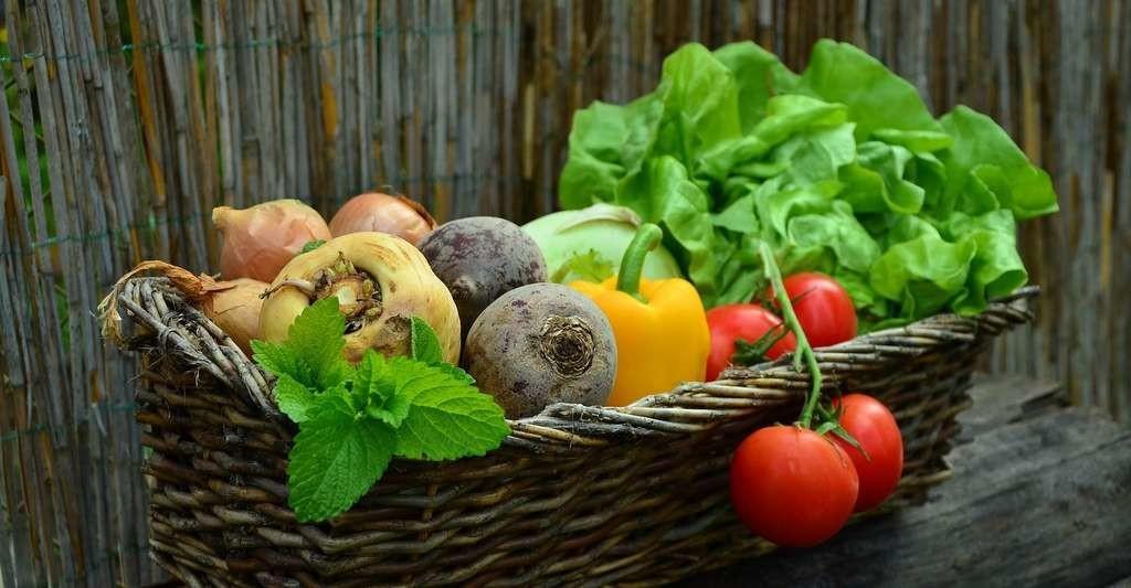 Avec le réchauffement climatique, les rendements des cultures devraient baisser. En Égypte, par exemple, la production de légumes pourrait accuser une chute de 40 % d'ici 2050.