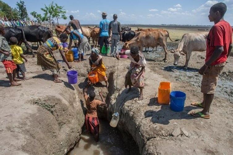 Au Malawi (sud-est de l'Afrique), les habitants sont obligés de creuser des puits dans le lac asséché de Chilwa pour abreuver leur bétail. Depuis les années 1990, la fréquence des sécheresses a augmenté et le lac a perdu près de 60 % de l'eau qu'il contenait auparavant.