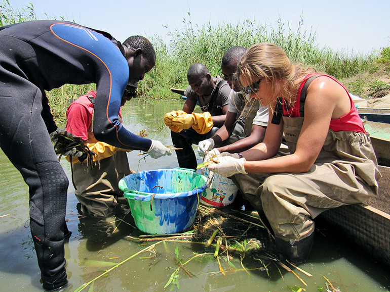 Researchers process the vegetation from a sampling point in northwestern Senegal, May 2016.
