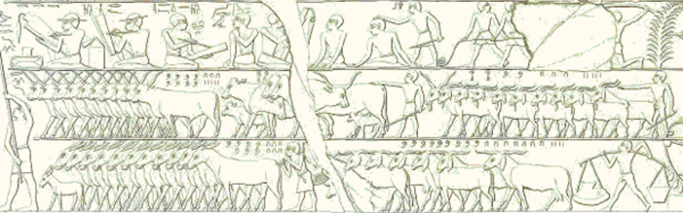 This scene depicts a cattle count (copied by the Egyptologist Lepsius). In the middle register we see 835 horned cattle on the left, right behind them are some 220 animals and on the right 2,235 goats. In the bottom register we see 760 donkeys on the left and 974 goats on the right.