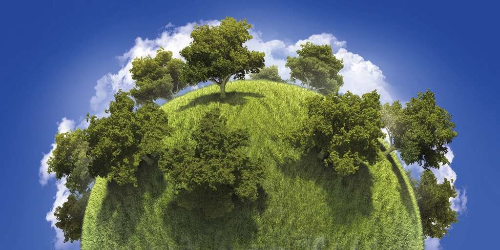 Il faudrait planter 1.200 milliards d'arbres supplémentaires sur la planète pour absorber l'équivalent de dix ans d'émissions de CO2 anthropiques.
