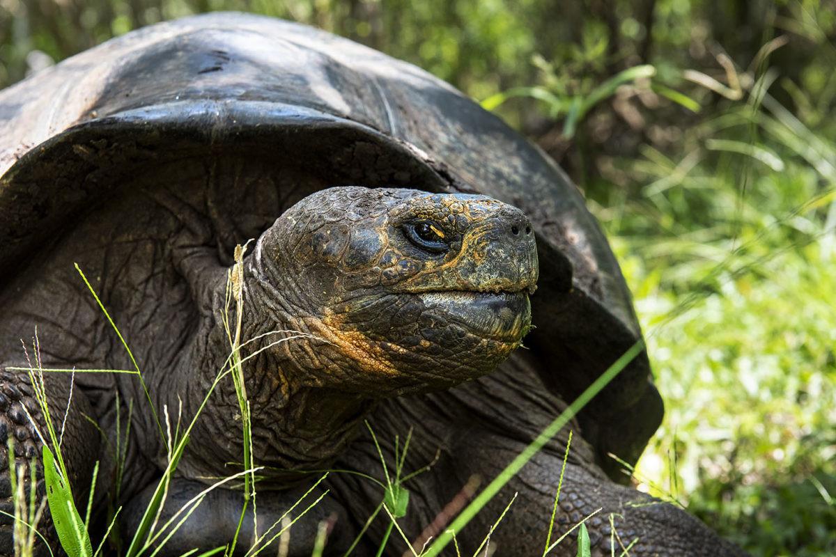 imagen de una tortuga gigante