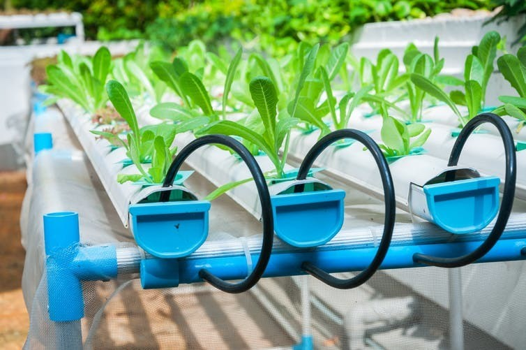 We have seen the advances of hydroponic farming.