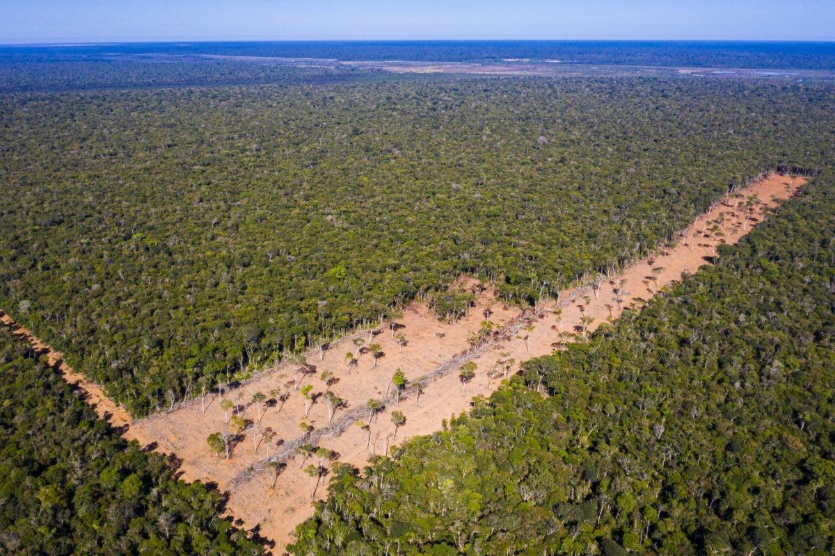 Imagem de drone do desmatamento do Parque Indígena do Xingu feita pela cineasta indígena Kamikia Kisedje.