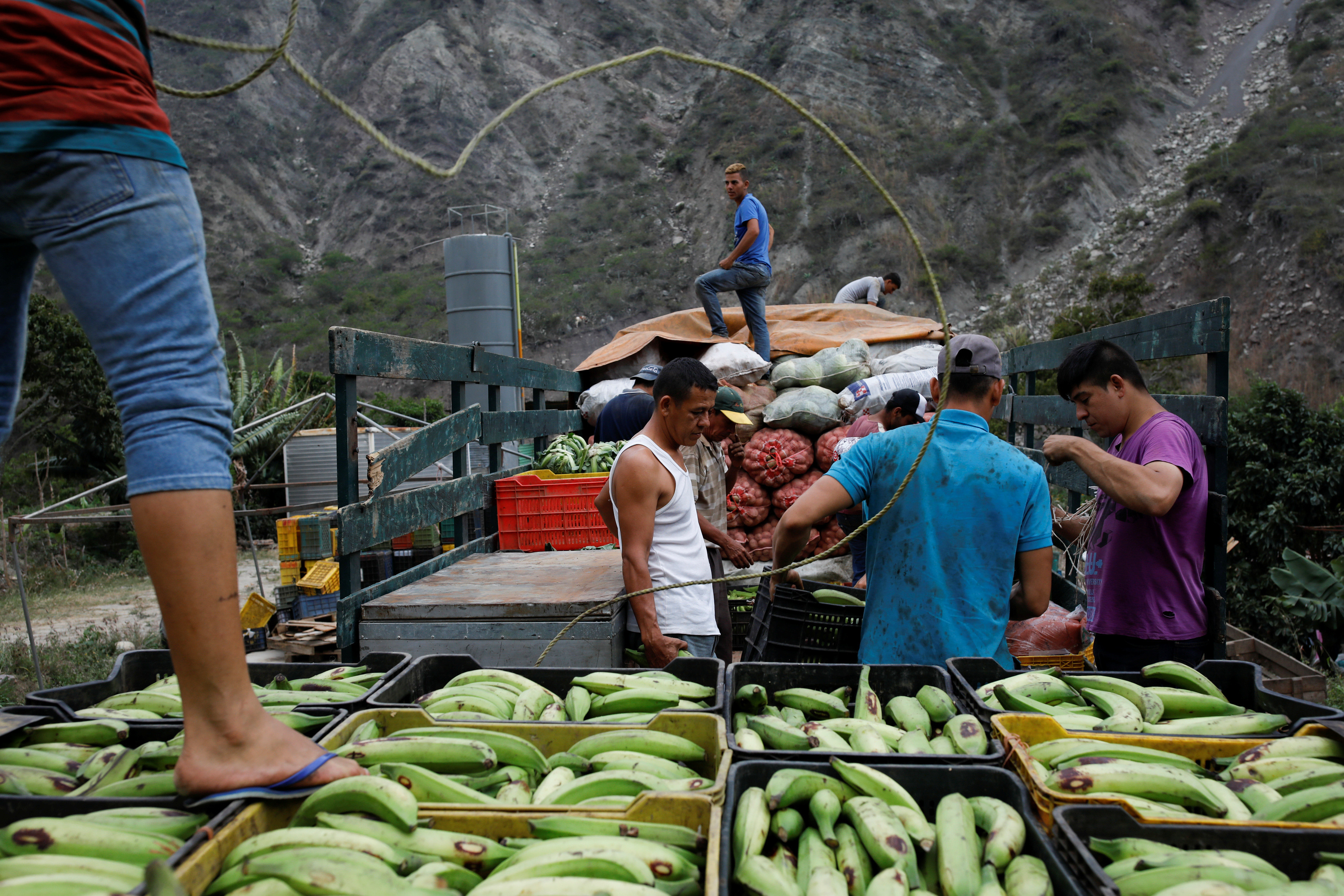 Workers transport plantain in La Grita, Venezuela.