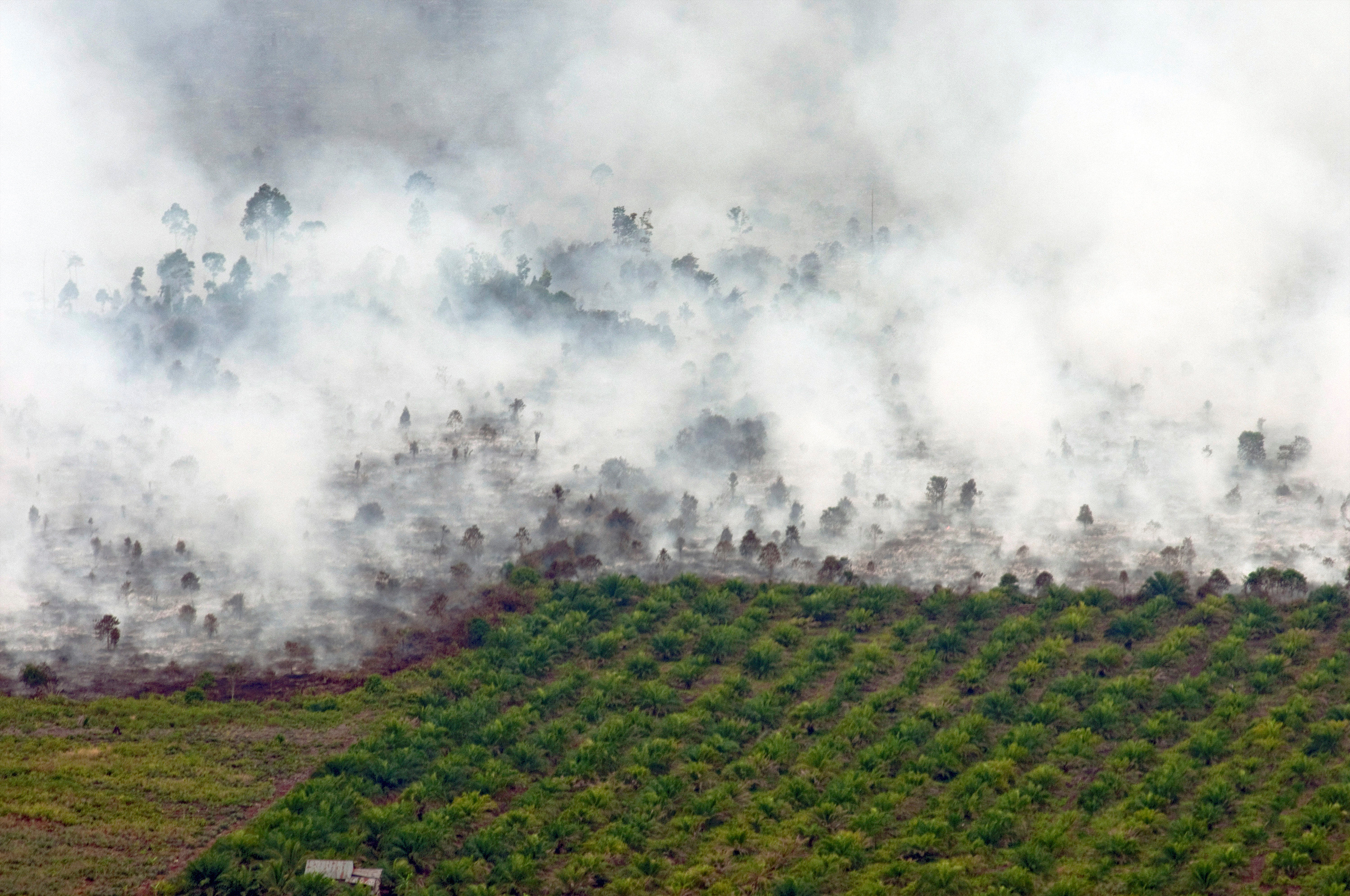 Palm oil is often viewed as an irresponsible innovation because of its environmental impact