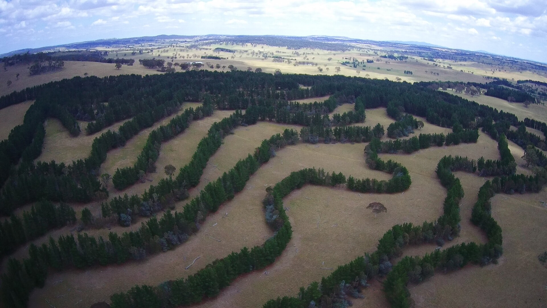 Agroforestry contour planting in Australia