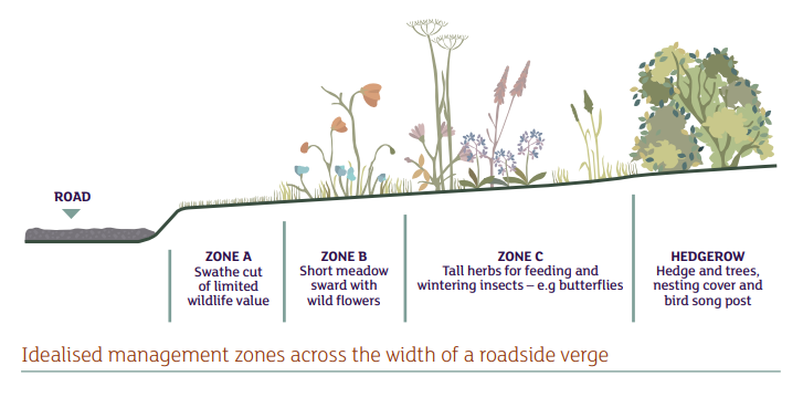 A verge to bolster biodiversity.
