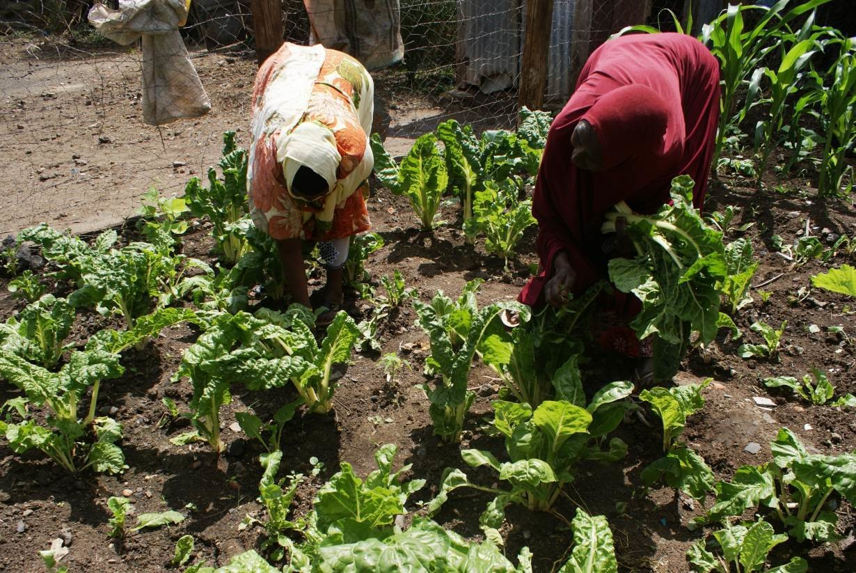 Fatuma Wario and a colleague work at her kitchen garden in Tuluroba village, eastern Kenya, December 6, 2018.