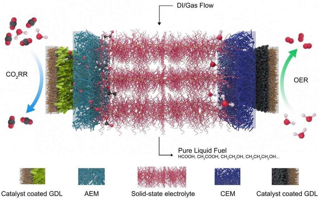 Ce schéma montre l'électrolyseur développé à l'université Rice (États-Unis) pour réduire le dioxyde de carbone (CO2), un gaz à effet de serre, en combustibles de valeur. À gauche, un catalyseur qui sélectionne le dioxyde de carbone et le réduit à ions formiates chargés négativement, qui sont entraînés à travers une couche de diffusion de gaz (GDL) et une membrane échangeuse d'anions (AEM) vers l'électrolyte central (en rouge). À droite, un catalyseur de réaction de dégagement d'oxygène (OER) génère des protons positifs à partir de l'eau et les envoie à travers la membrane échangeuse de cations (CEM). Les ions se recombinent en acide formique ou en d'autres produits qui sont extraits du système par de l'eau désionisée (DI) et du gaz.