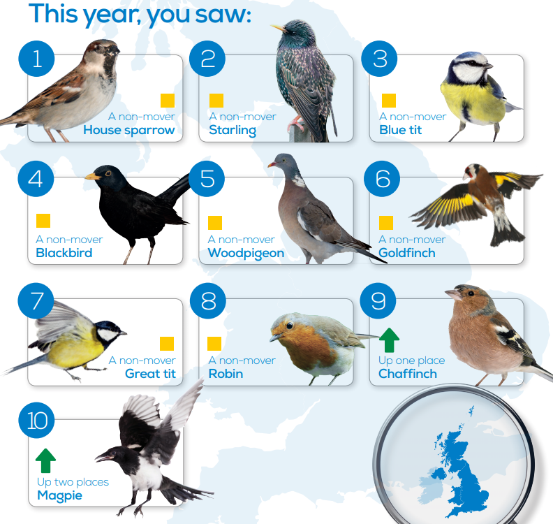 Britain's most spotted birds.