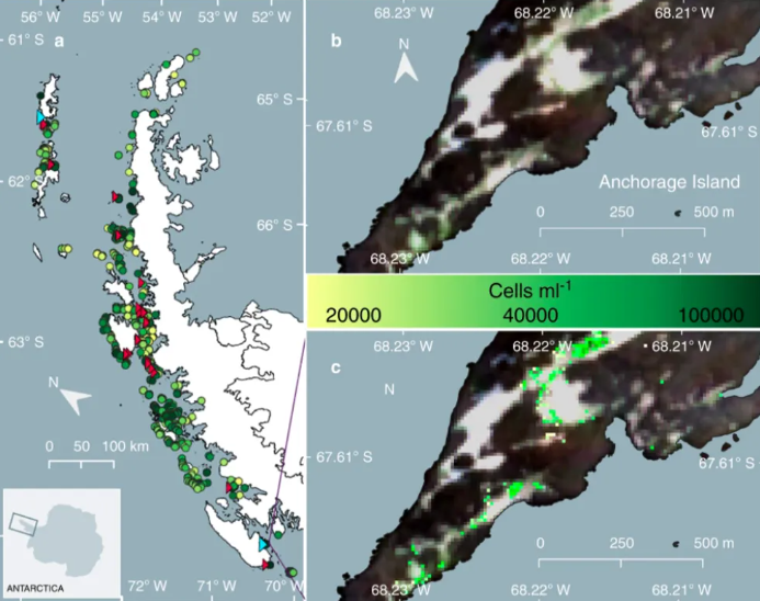 On the left: overview of the locations of individual blooms (red triangles indicate ground validation sites, cyan ones indicate field validation sites). Top right: satellite image from a validation site on Anchorage Island. Bottom right: exact location of green snow algae sites.