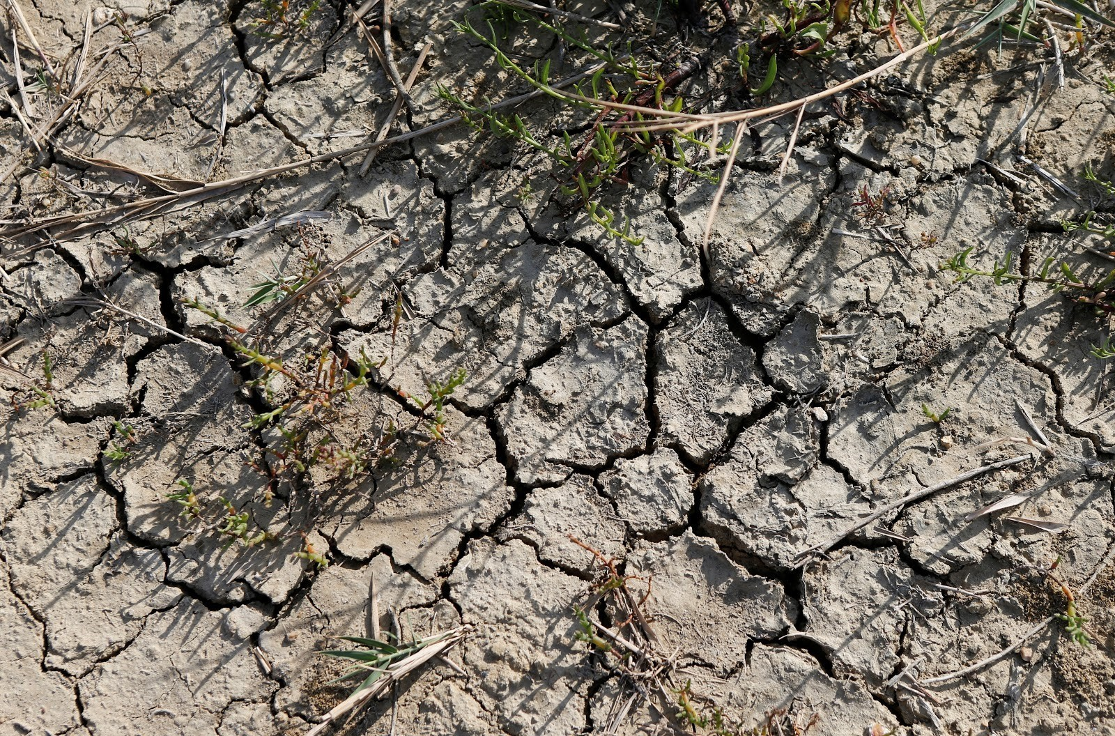Somalia has suffered years of extreme droughts.