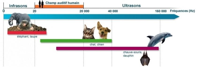 Les fréquences hertziennes perçues par l'oreille humaine en comparaison avec quelques espèces animales.