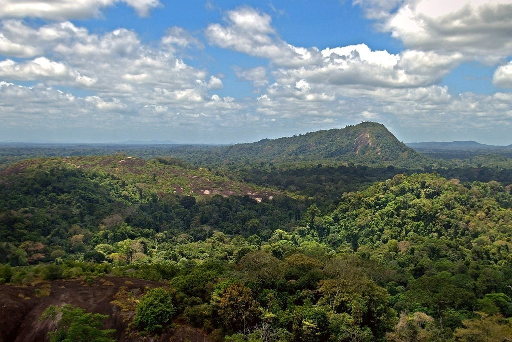 Suriname is the most forested country in the world