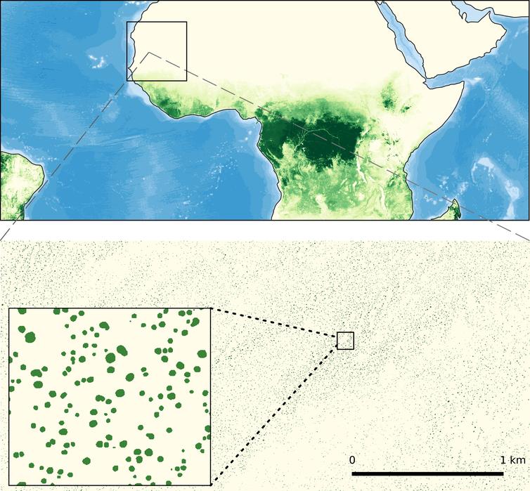 un diagrama de árboles cartografiados en África occidental