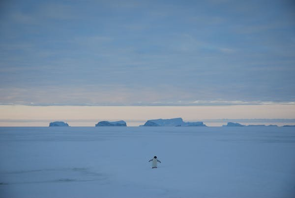 Les grands icebergs tabulaires proviennent de glaciers déversant la glace antarctique dans l'océan.Alexandre Trouvilliez,