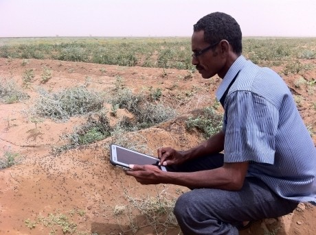 With the eLocust3 system, FAO has been monitoring and forecasting possible threats to food production in Eritrea. The tool uses field observations made during surveying and transmits the data to the National Locust Centre in real-time via satellite